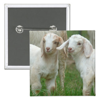 Two Cute White Baby Goats Pin