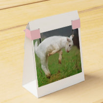 Two Cute White Baby Goats Favor Box