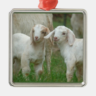 Two Cute White Baby Goats Metal Ornament