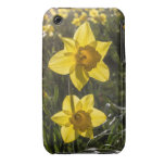 Two Daffodil Flowers iPhone 3 Covers