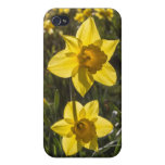 Two Daffodil Flowers iPhone 4/4S Case