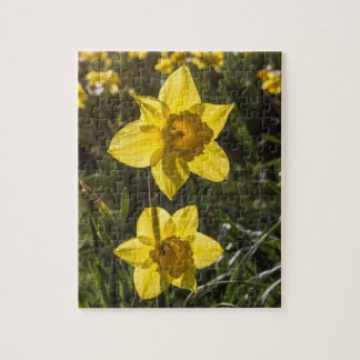 Two Daffodil Flowers Jigsaw Puzzle