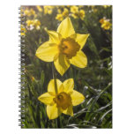 Two Daffodil Flowers Spiral Notebooks