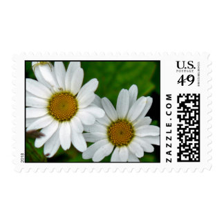 Two Daisies Postage