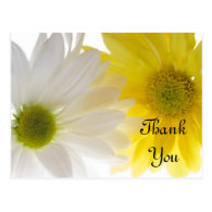 Two Daisies Thank You Postcard