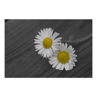 two daisy as symbol for love posters