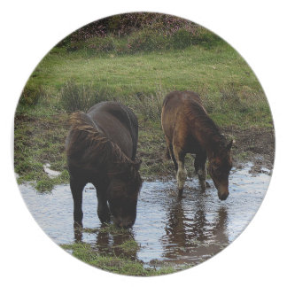 Two Dartmoor Ponies Drinking At Watering Hole Melamine Plate