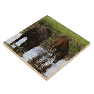 Two Dartmoor Ponies Drinking At Watering Hole