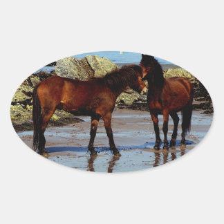 Two Dartmoor ponies on remote beach in south Devon Oval Sticker