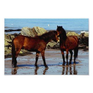 Two dartmoor ponies on remote beach in south Devon Photo Print