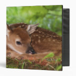 Two day old White-tailed Deer baby, Kentucky. 3 Ring Binder