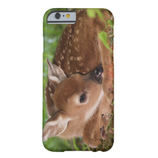 Two day old White-tailed Deer baby, Kentucky. Barely There iPhone 6 Case