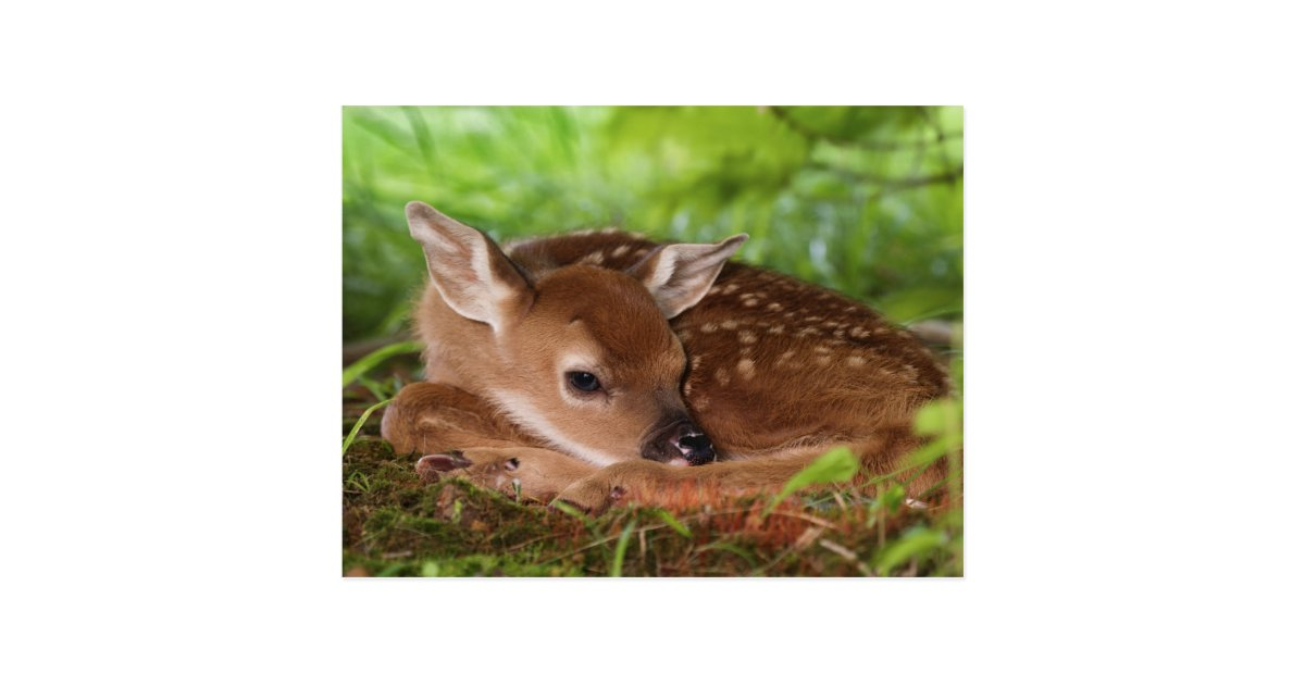 how to draw a baby white tailed deer