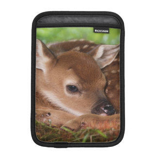 Two day old White-tailed Deer baby, Kentucky. Sleeve For iPad Mini