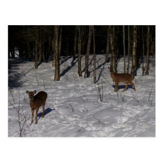 Two Deer - My Grandmother's Backyard Postcard