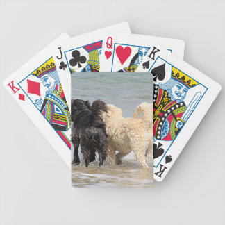 Two dogs at beach bicycle playing cards