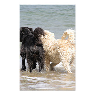 Two dogs at beach stationery