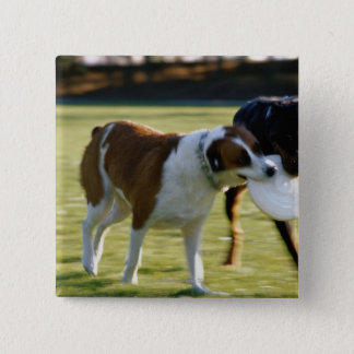 Two Dogs Fighting over Plastic Disc Button