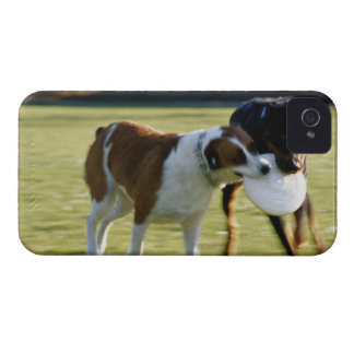 Two Dogs Fighting over Plastic Disc iPhone 4 Cases