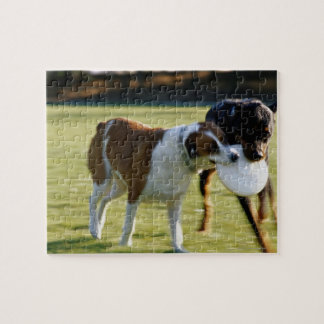 Two Dogs Fighting over Plastic Disc Jigsaw Puzzle