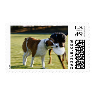 Two Dogs Fighting over Plastic Disc Postage