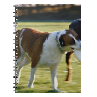 Two Dogs Fighting over Plastic Disc Spiral Notebook
