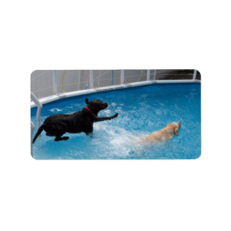 Two dogs jumping into a swimming pool! label