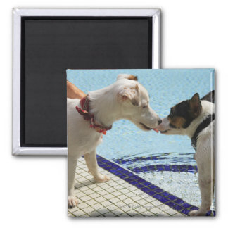 Two Dogs kissing at the poolside Refrigerator Magnet