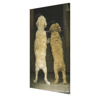 Two dogs looking in door window, rear view canvas print