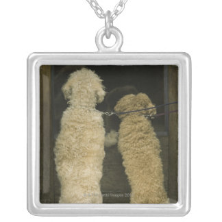 Two dogs looking in door window, rear view silver plated necklace