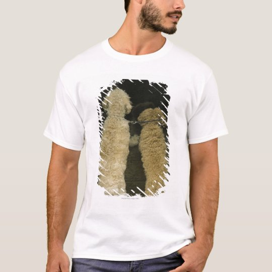 Two dogs looking in door window, rear view T-Shirt