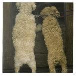 Two dogs looking in door window, rear view tile