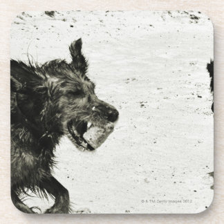 Two dogs playing on a beach. drink coaster