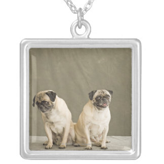 Two dogs posing on a table silver plated necklace