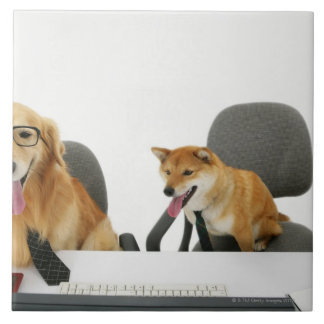 Two dogs wearing tie and glasses ,sitting on 2 large square tile