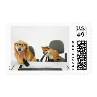 Two dogs wearing tie and glasses ,sitting on 2 postage