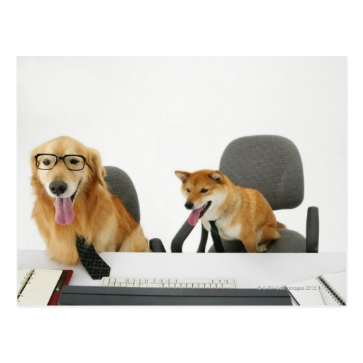 Two dogs wearing tie and glasses ,sitting on 2 postcard