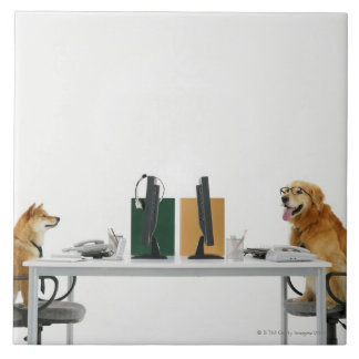 Two dogs wearing tie and glasses ,sitting on large square tile