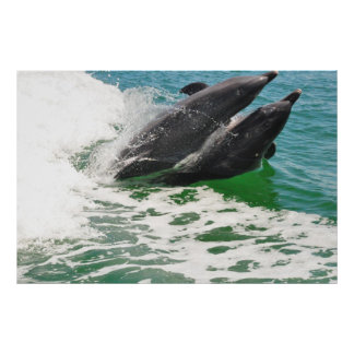 Two Dolphins Jumping From Water in Unison Poster