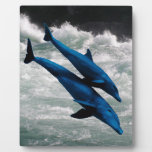 Two Dolphins Swiming at Sea Display Plaque