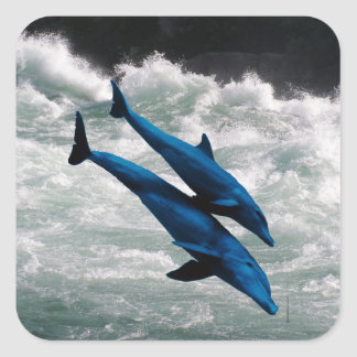 Two Dolphins Swiming at Sea Square Sticker