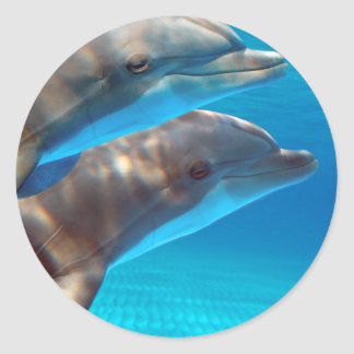 Two Dolphins swimming Classic Round Sticker