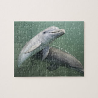 Two Dolphins underwater Jigsaw Puzzles
