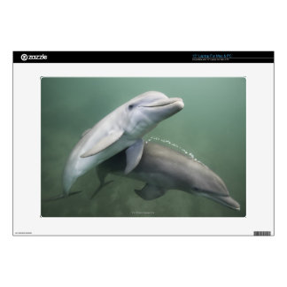 Two Dolphins underwater Laptop Skins