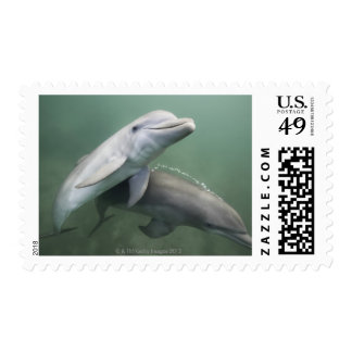 Two Dolphins underwater Postage