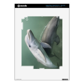 Two Dolphins underwater Skins For iPad 3
