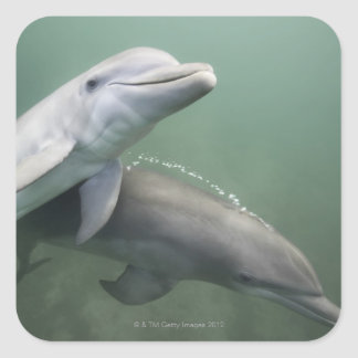 Two Dolphins underwater Square Sticker