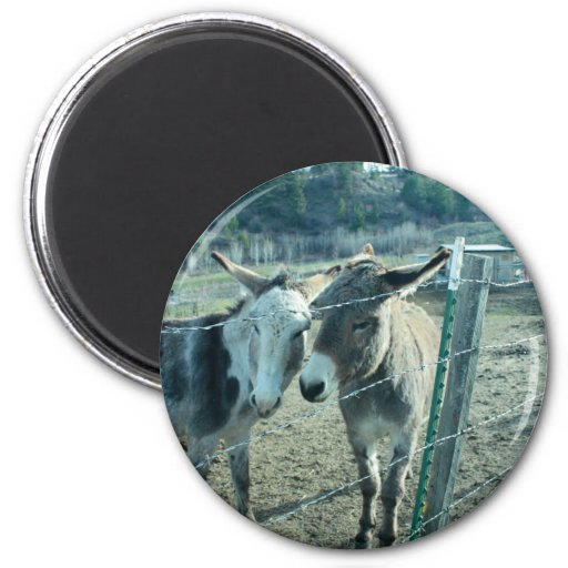 Two Donkeys Fridge Magnet