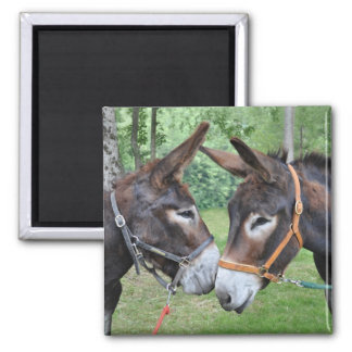 Two donkeys saying hello 2 inch square magnet