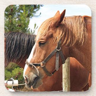 Two draft horses beverage coaster